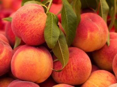 Основные заболевания персика