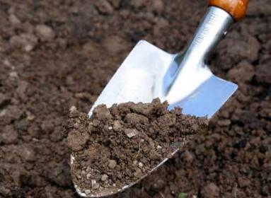Как улучшить почву огорода