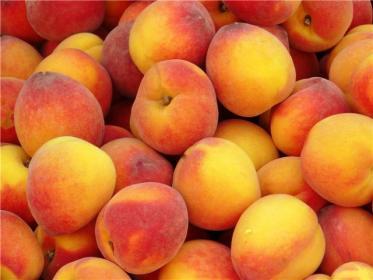 Описание рода персика (Persica)