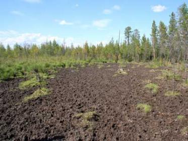 Солонцеватые почвы: описание, виды, уход