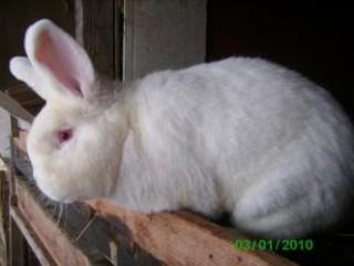 Правильное питание для кроликов