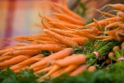 Допосевная подготовка семян моркови