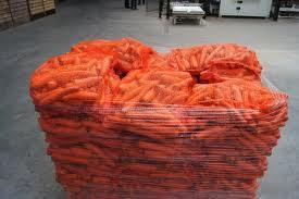 Особенности выращивания моркови для получения пучков и ранней продукции на полях