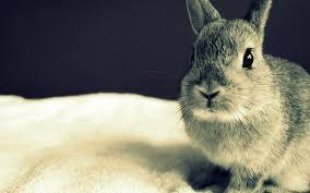 Выделка  шкурок   кроликов