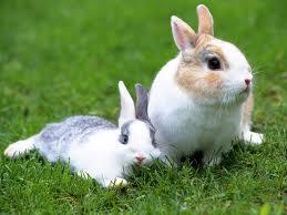 Крашение   пряжи у кроликов