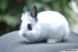 Переменное, поглотительное, вводное скрещивание кроликов