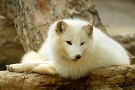 Общая характеристика  кормов для  лисиц
