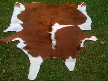 Как правильно забить  корову или  бычков?