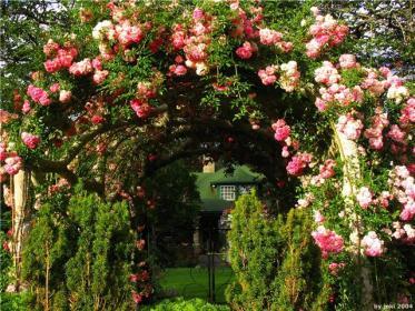 Вырезка дикой поросли плетистых роз