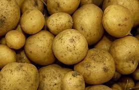 Характеристика сорта картофеля Кобза