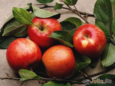 Сорт яблони Колорит. Описание