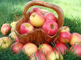 Описание сорта яблони Харьковское.