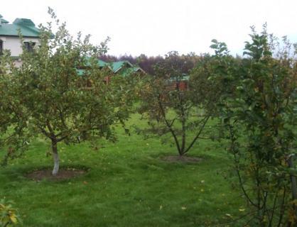 Формирование косточковых деревьев