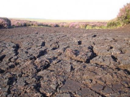 Заболоченные почвы
