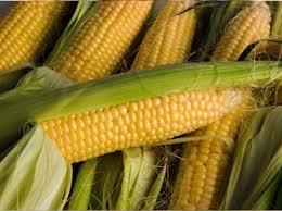 Уборка сахарной кукурузы
