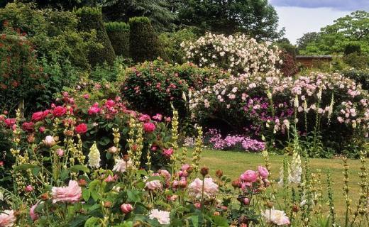 Наблюдаем за цветами в саду
