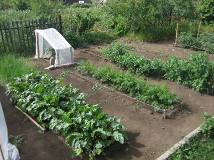 Уборка огорода в августе