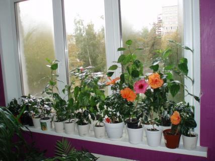 Какие растения любят расти в тени?