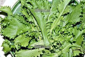 Листья салата вырастают маленькими?