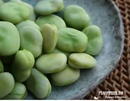 Как правильно подготовить бобы к посеву, чтобы на них не полопалась кожица?