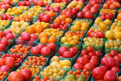 Выберем хороший сорт помидоров