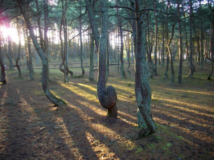 Химзащита деревье
