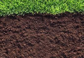 Как бороться с вредителями в почве?