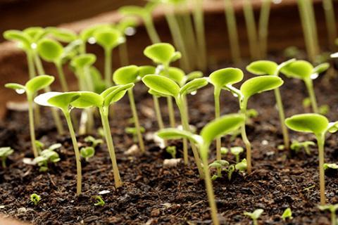 Почему семена не всходят?