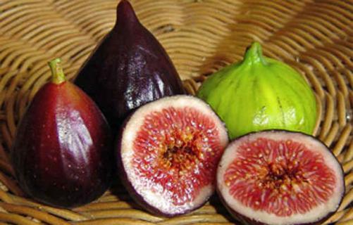 Можно ли выращивать инжир в Луганской области?