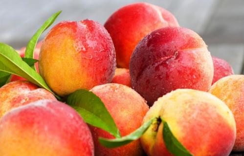 Как защитить персик от вредителей