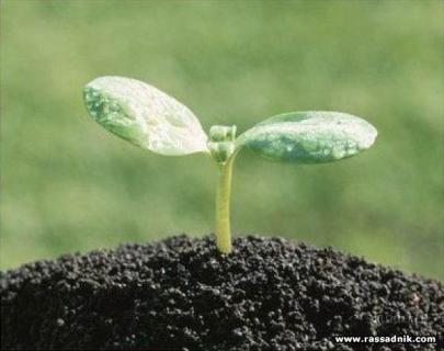 Почвосмеси для рассады