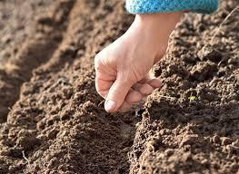 Весенние посевы и посадки