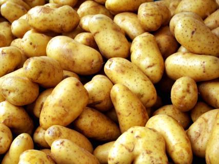 Можно ли применять в борьбе с болезнями  картофеля народные методы?