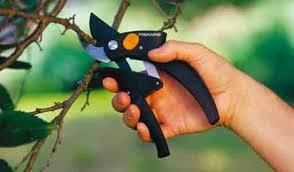 Исцеляющий бальзам для дерева