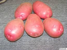Описание сортов картофеля