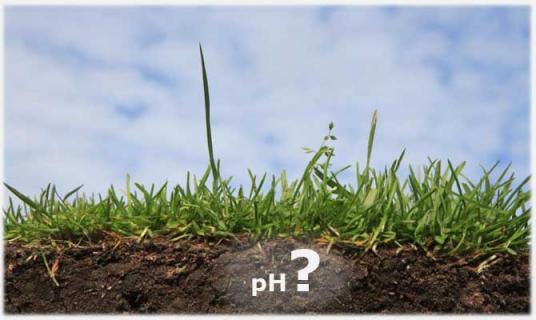 Как  определить кислотность почвы?