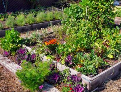 Планировка огорода на 4 части