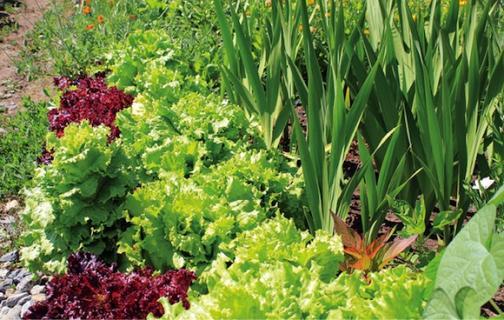 Огородная эстетика