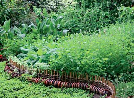 Растения помогут