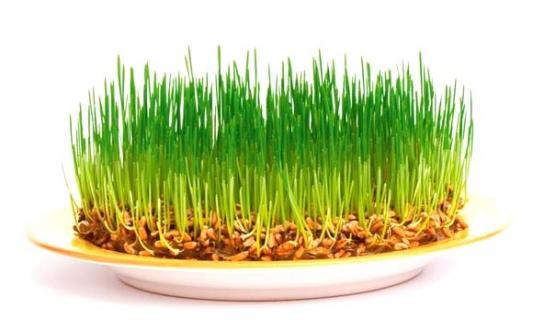 Пророщенные семена на тарелке