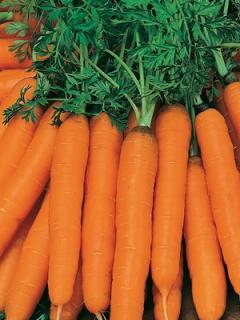 Длинноплодные сорта моркови