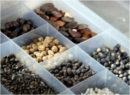 Хранение семян овощей