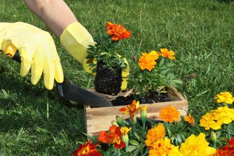 Что нужно сделать в  саду