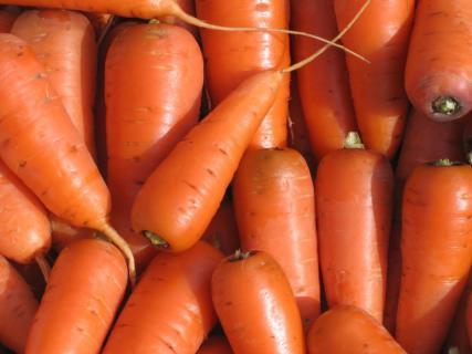 Сорт моркови Оленка подвела