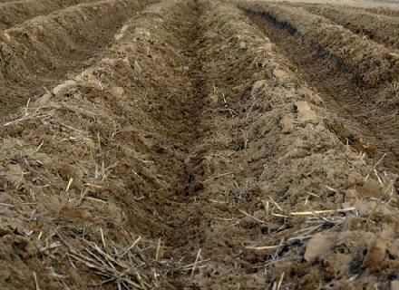Какая глубина посадки картофеля бывает?