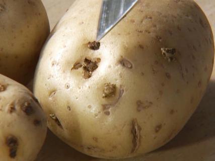 Можно ли увеличить крахмалистость картофеля?