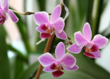 Какие виды орхидей проще выращивать в комнатных условиях?
