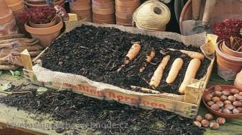 Рекомендуемые условия хранения овощей