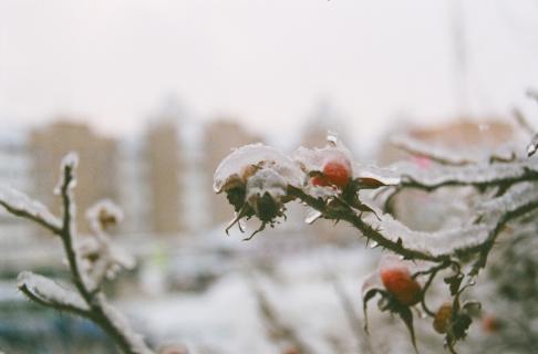 Уход за подмерзшими деревьями
