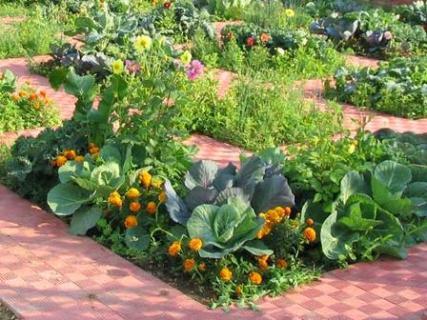 Смешанные посевы овощей